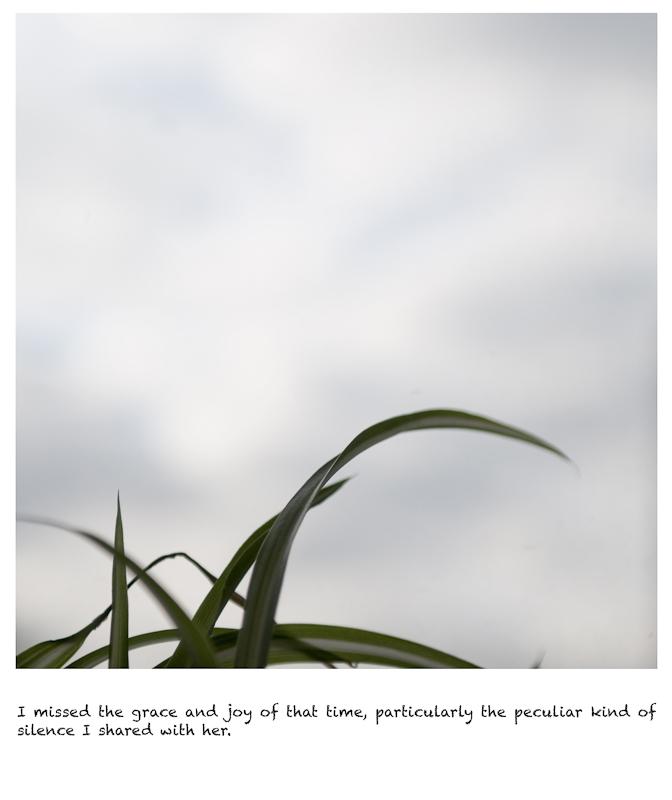 http://songkun.net/files/gimgs/7_20110201-leafs.jpg